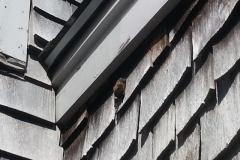 bat-under-trim