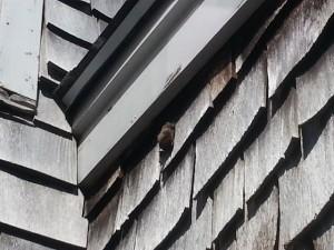 bat under trim