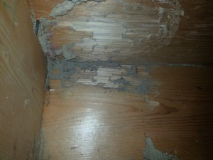 Termite damage in floor joist.
