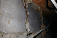 snake-skins-basement